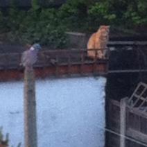 Err Pigeon - look behind you!