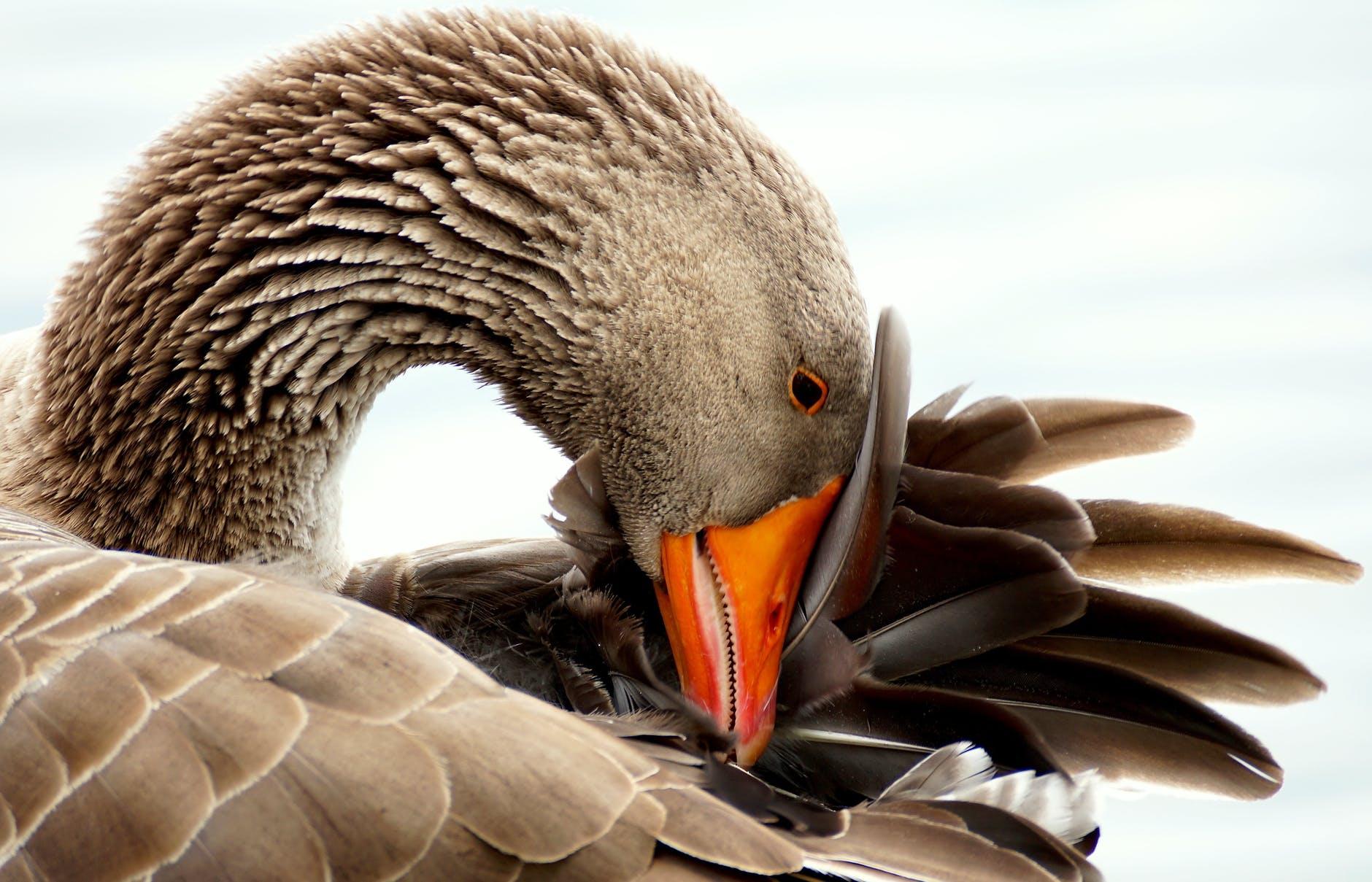 Marina Birds